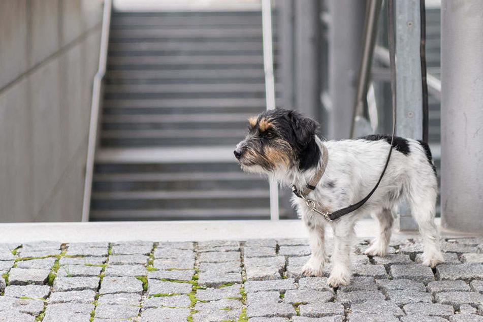 In Neubrandenburg starb ein angebundener Hund knappe 50 Meter von einem Tierheim entfernt. (Symbolbild)