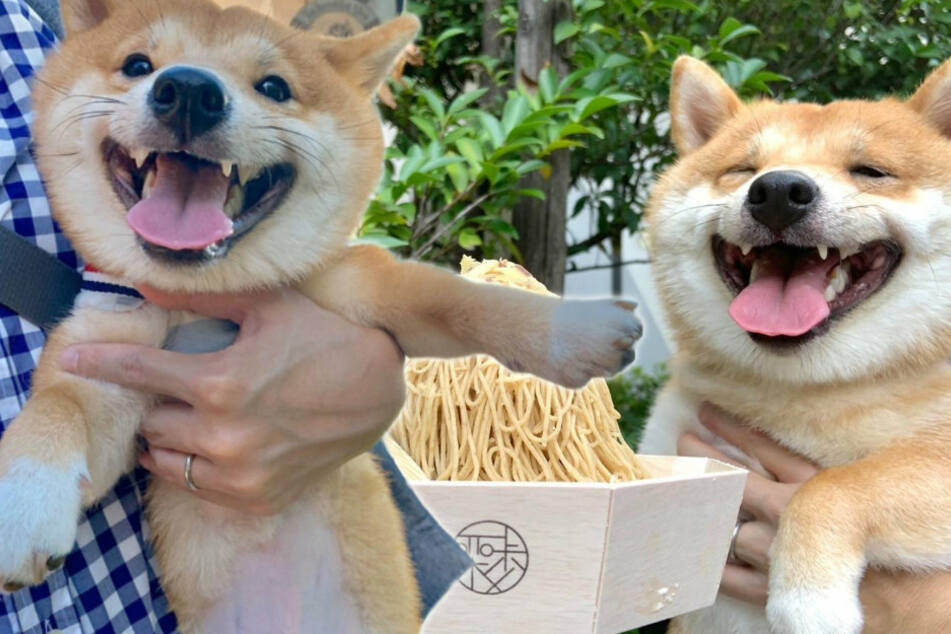 Noodles and a cute Shiba to go, please!