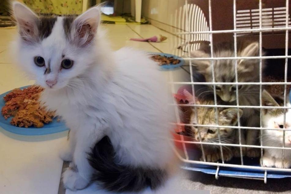 Teilweise zu dritt wurden die armen Tiere in eine Transportbox gesteckt.