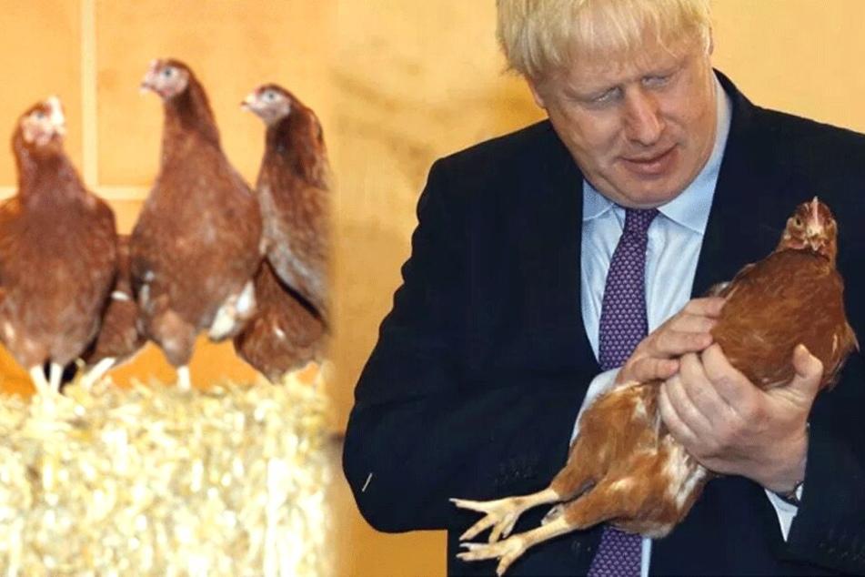 WTF!? Britischer Premier Boris Johnson posiert mit Hühnern