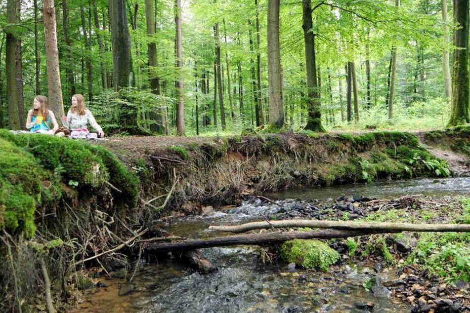 Ein Waldstück im Teutoburger Wald in der Nähe der Bielstein Schlucht.