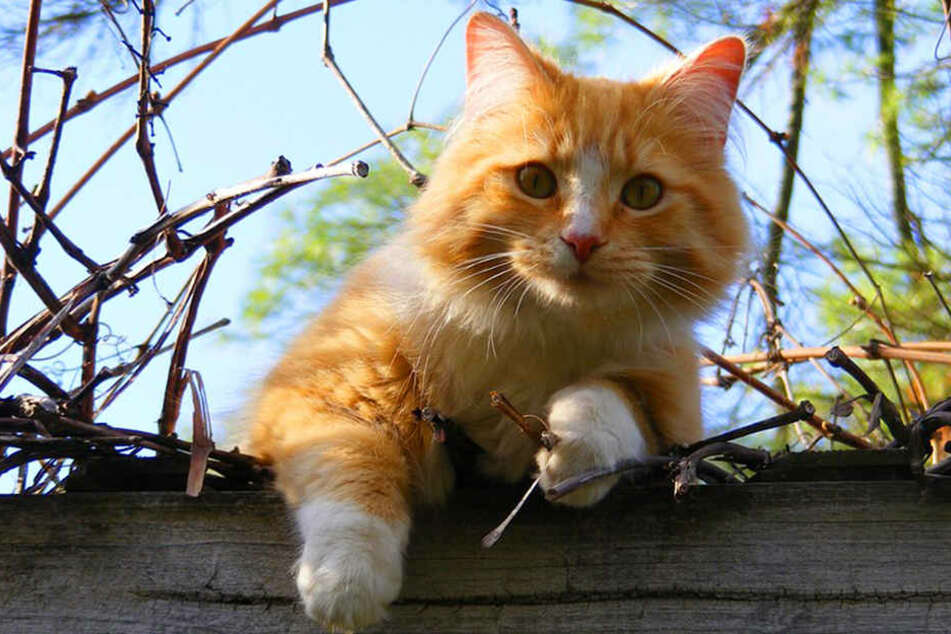 Naturschützer fänden es sinnvoller, freilaufende Katzen kastrieren zu lassen.