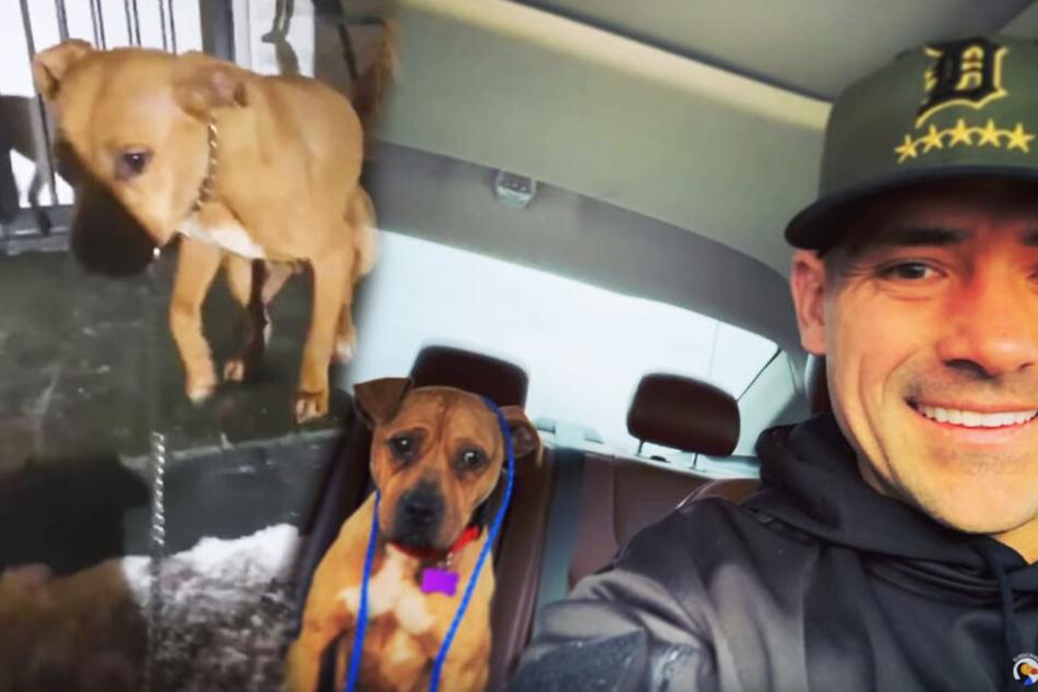 Polizist rettet obdachlosen Hund bei -29 Grad, danach geht er noch weiter
