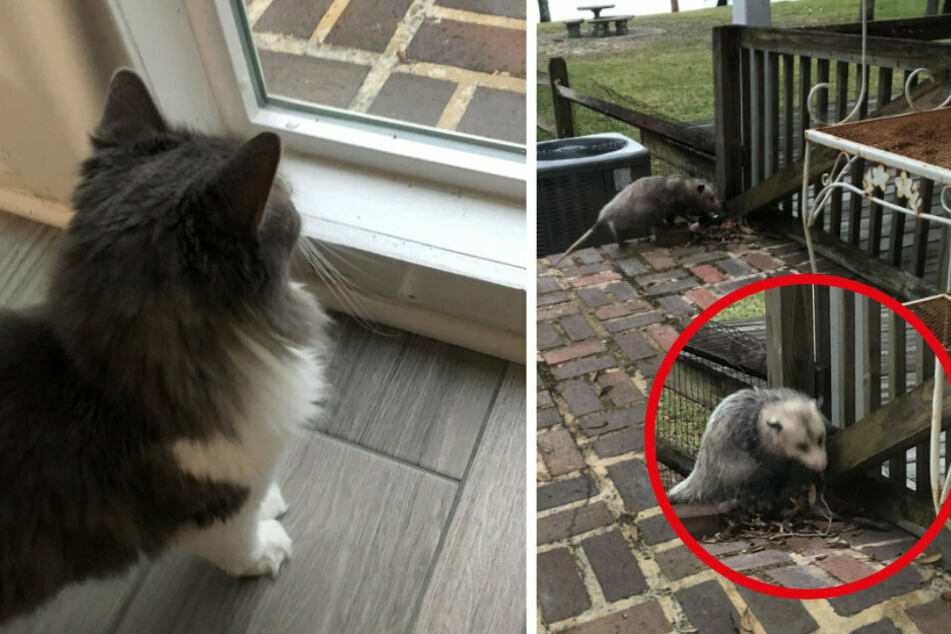 This cat is stunned by what it sees in the garden!