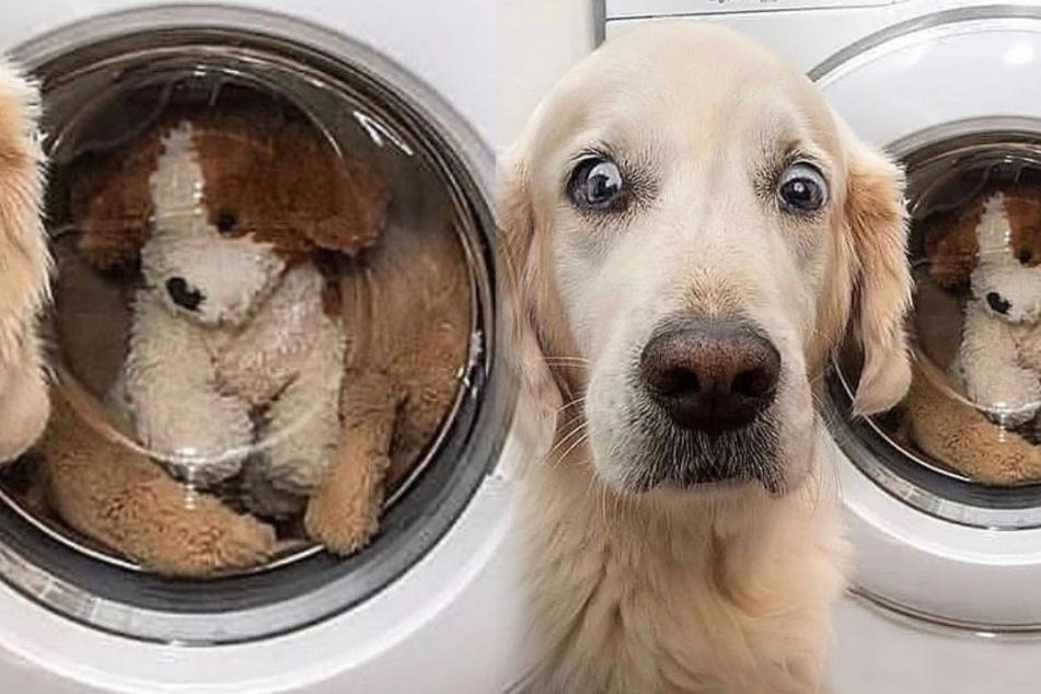 Was dieser Hund gerade wohl denkt?