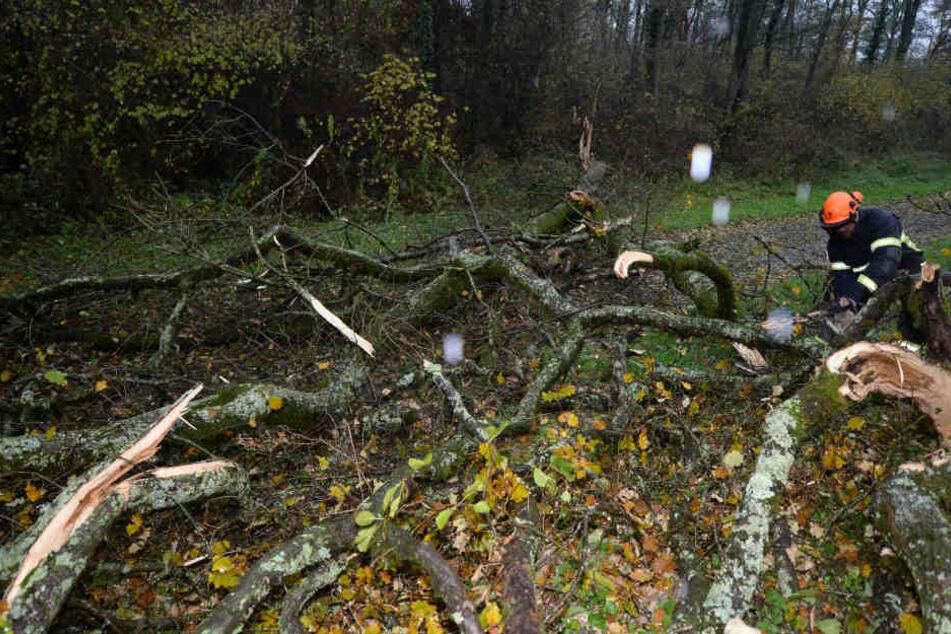 Feuerwehrleute zersägen in Freiburg einen umgestürzten Baum.