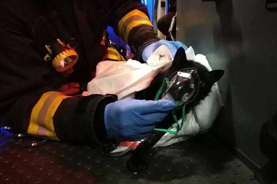 Die verletzte Katze wird mit Sauerstoff versorgt.