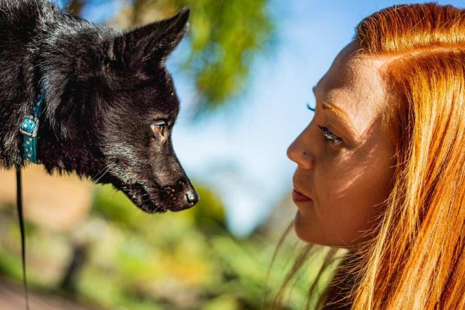 Spürt mein Hund wie ich mich fühle?