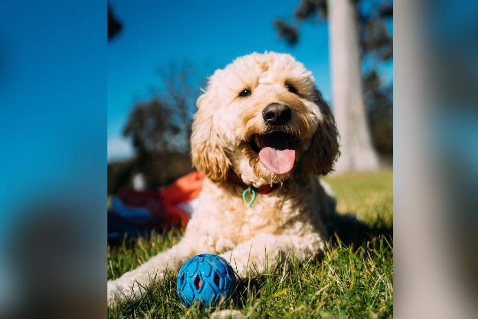 Einen blauen Ball kann ein Hund sehr gut sehen!