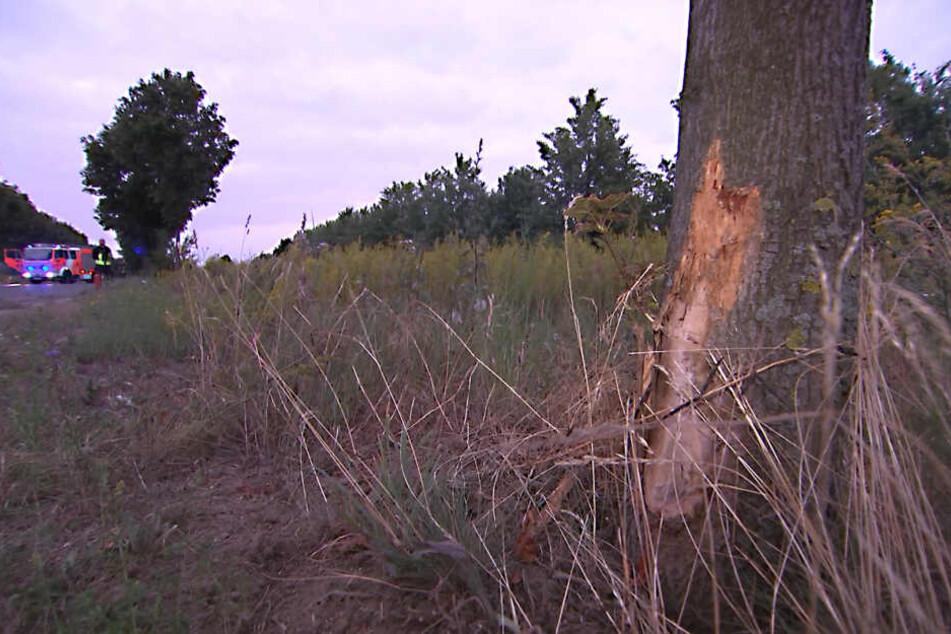 Die Spuren am Baum sind deutlich zu erkennen.