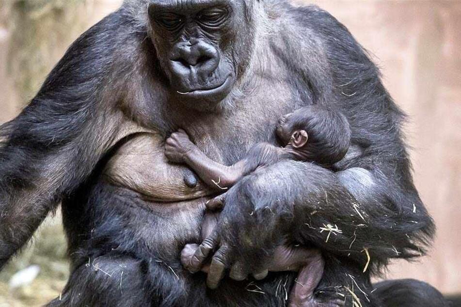 Liebevoll hält Mama Changa-Maidi ihr neugeborenes Baby im Arm.