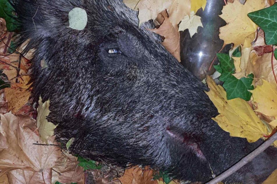 Die Polizei veröffentlichte ein Bild des getöteten Tieres.