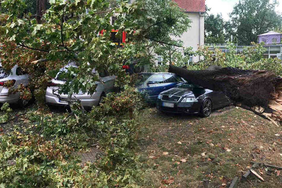 Unwetter-Alarm in Dresden: Bäume stürzen um