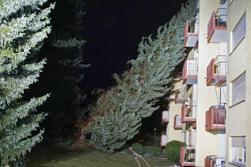 Pforzheim: Ein Baum ist hier auf ein Haus gestürzt.