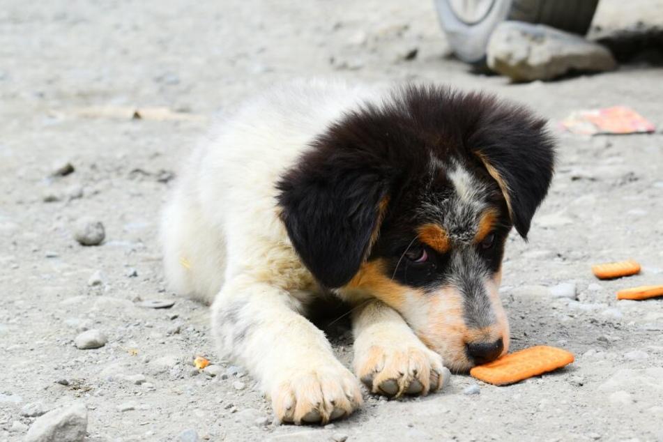 Wenns ums Futter geht, greifen Hunde schon mal zu einer List.