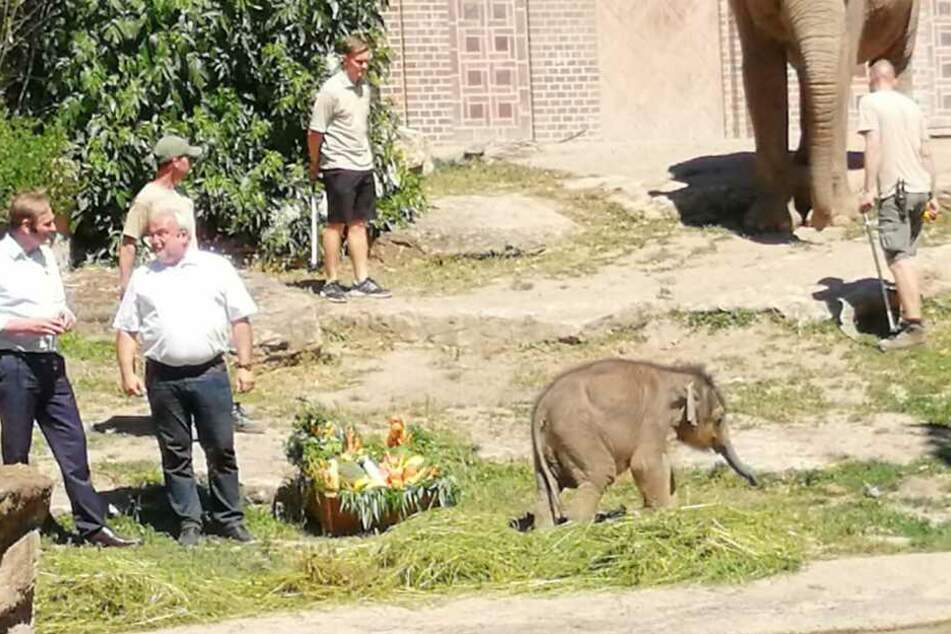Am Montagnachmittag wurde der kleine Elefant aus dem Leipziger Zoo feierlich getauft.
