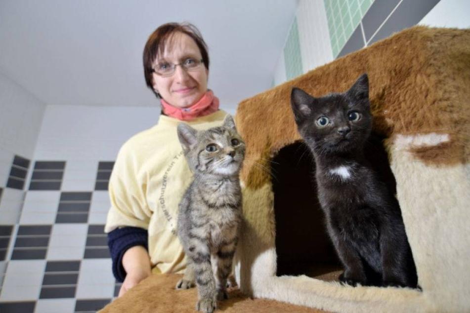 Nach Weihnachten: Diese Kätzchen müssen ins Heim