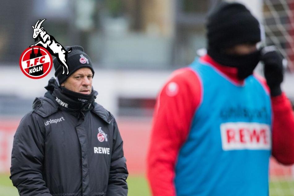 Wegen Modeste-Tränen: Kölns Trainer kritisiert Fußball-Geschäft