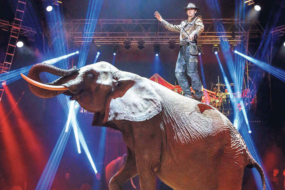Imposanter Anblick: Tiertrainer Erwin Frankello steht auf dem Rücken seiner Elefantendame.