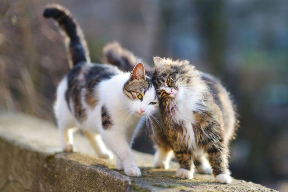 Drollig, verspielt ... und offenbar jemandem ein Dorn im Auge. Katzen haben nicht nur Fans.