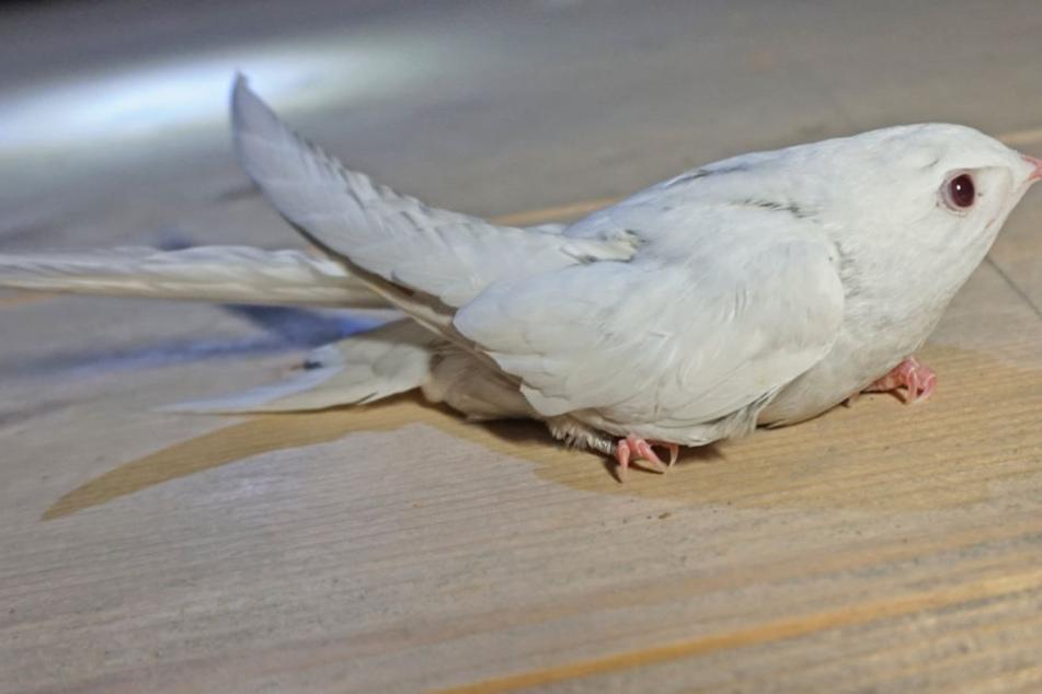 extrem selten das macht diesen vogel so besonders tag24. Black Bedroom Furniture Sets. Home Design Ideas