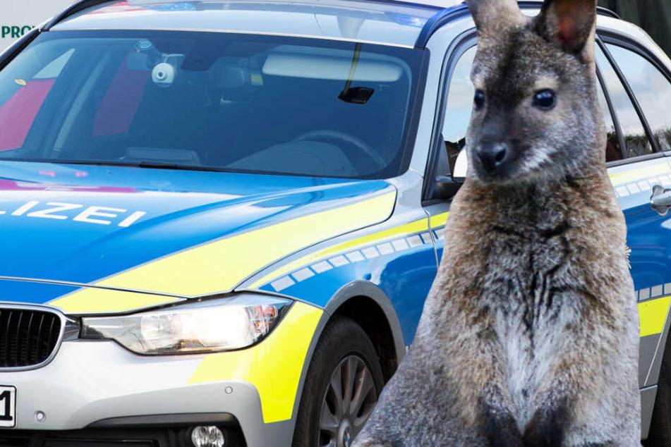 Die Polizisten sahen sich plötzlich Auge in Auge mit einem Bennett-Känguru.