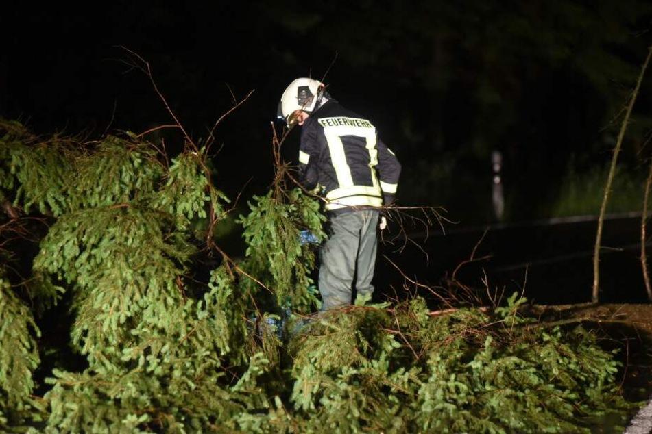 Bereits am Montagabend stürzten mehrere Bäume um.