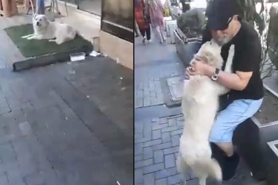 Das Wiedersehen zwischen Familie und Hund war herzzerreißend.