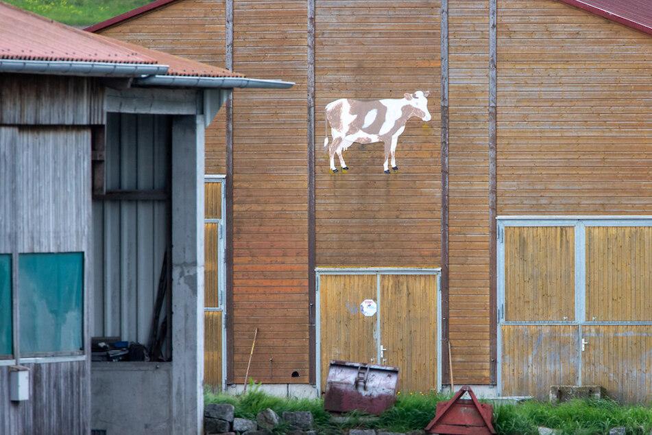171 Rinder verenden qualvoll: Anklage gegen Landwirt erhoben