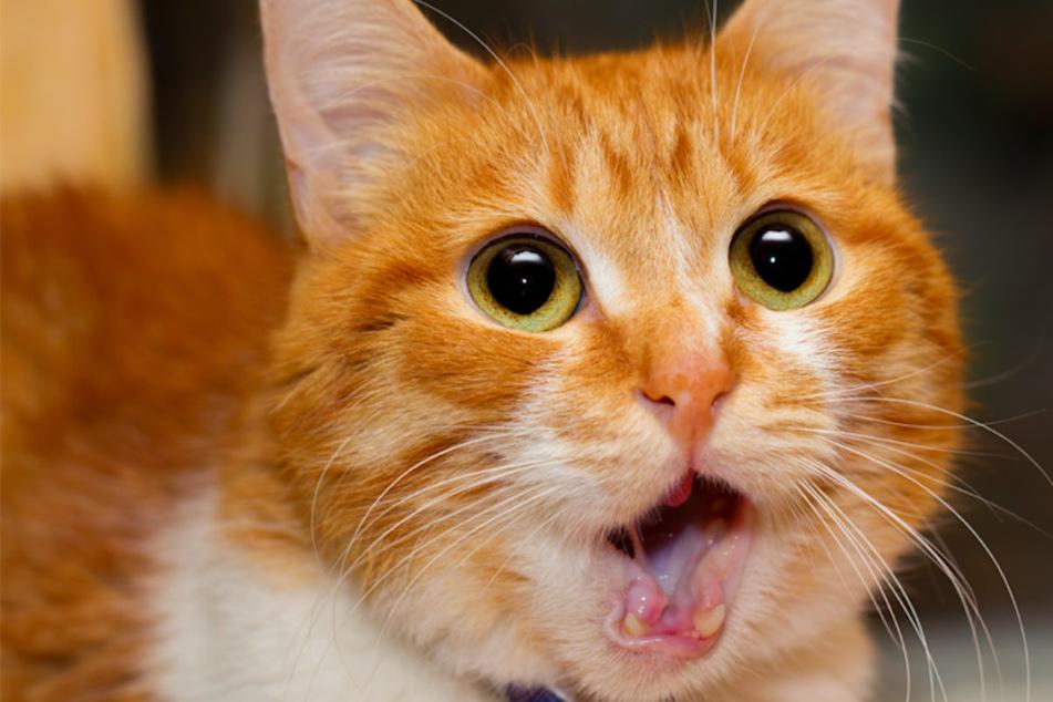 Mit einer verschwundenen Katze fing alles an, am Ende wurde gegen den Besitzer ermittelt. (Symbolbild)