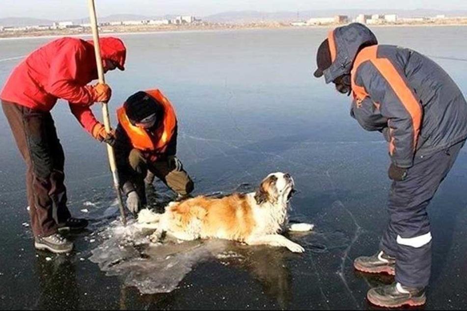 Feuerwehrleute zerbrechen das Eis um den Hund, um ihn zu befreien.