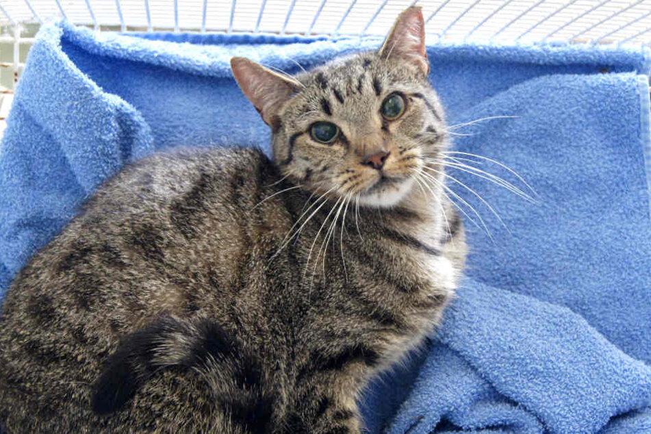 Viele Tiere waren krank, so hatten die Katzen etwa Katzenschnupfen. (Symbolbild)