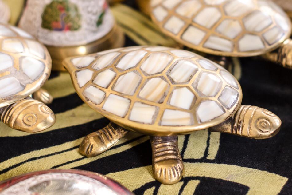 Schildkröte kommt mit goldenem Panzer zur Welt und wird wie eine Göttin verehrt