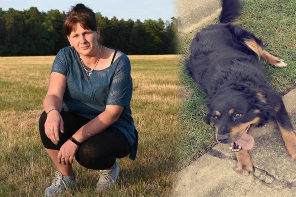 Frauchen sicher: Ein Wolf hat meinen Hund getötet