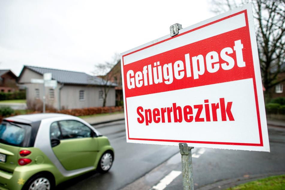 """Ein Schild mit der Aufschrift """"Geflügelpest Sperrbezirk"""" steht an einer Straße. Alle 300 Vögel des betroffenen Betriebs wurden getötet, das Gebäude gereinigt und desinfiziert."""