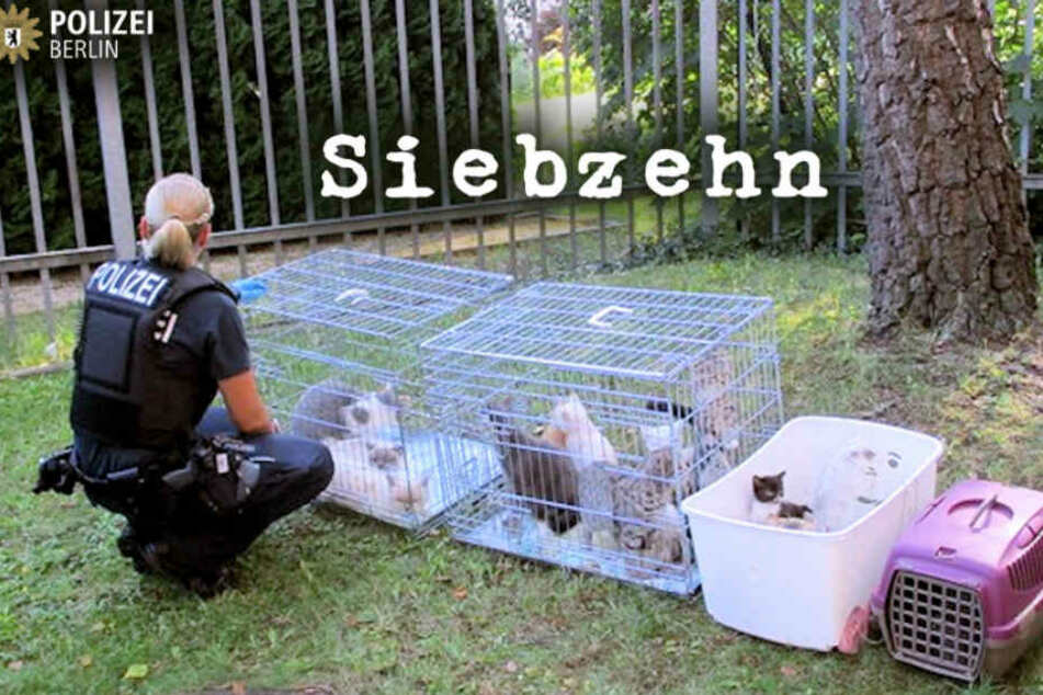 Eine Polizistin kümmert sich um die 17 Katzen.