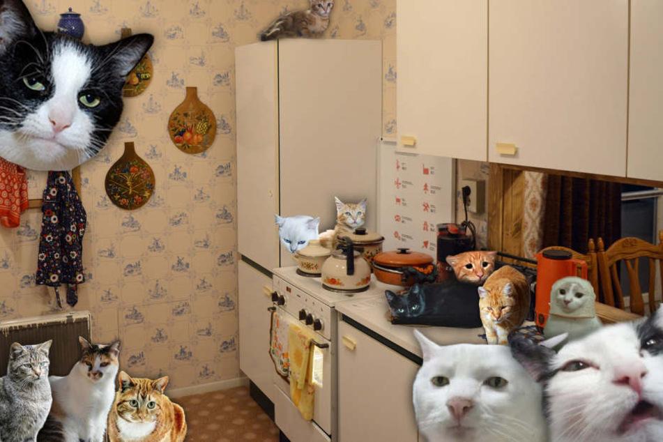 Frau hält 48 Katzen in 28-Quadratmeter-Wohnung
