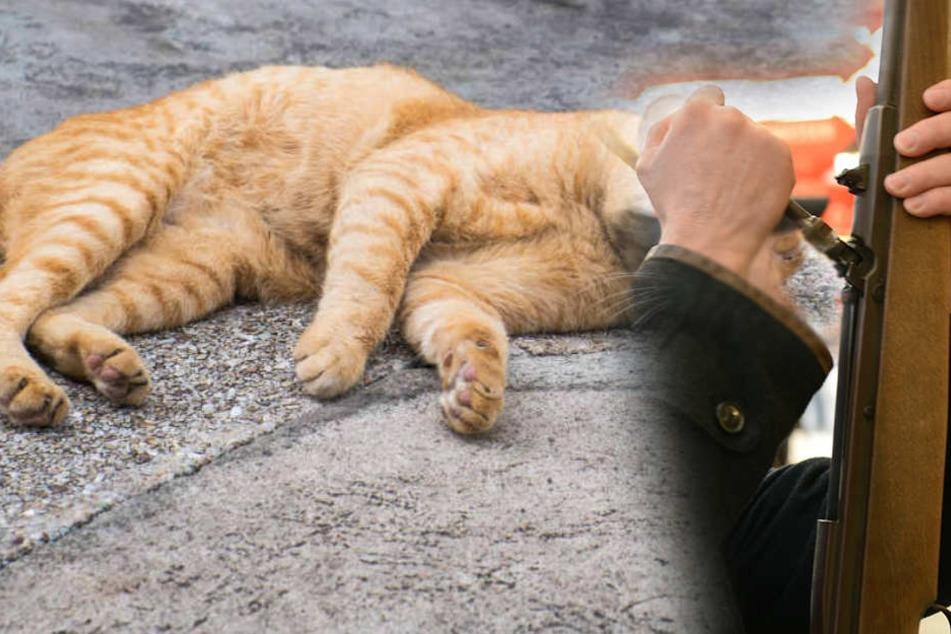 Tierquäler schießen auf Katze