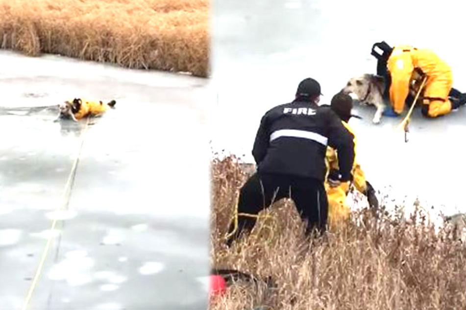 Dramatische Hunde-Rettung: Feuerwehrmann zeigt vollen Einsatz