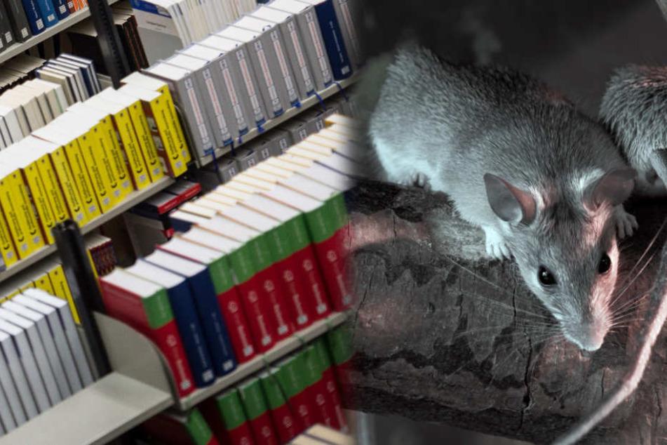 Igitt! Ratten zerstören Tausende Bücher in Unibibliothek!