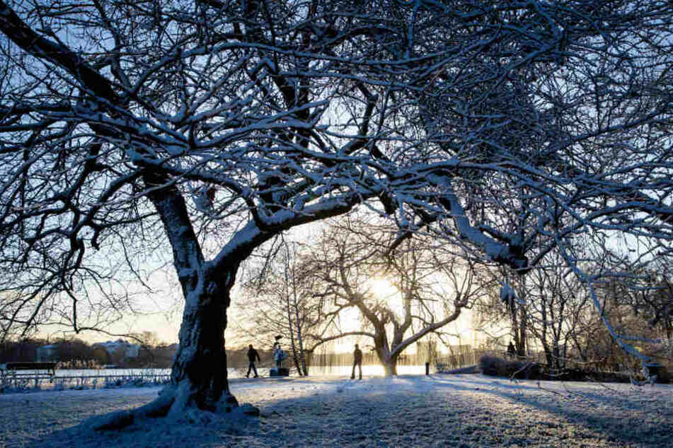 Wie im Winterwunderland sah es am Freitagmorgen an der Alster in Hamburg aus: Eine Schneedecke lag auf Bäumen, Wegen und Wiesen.