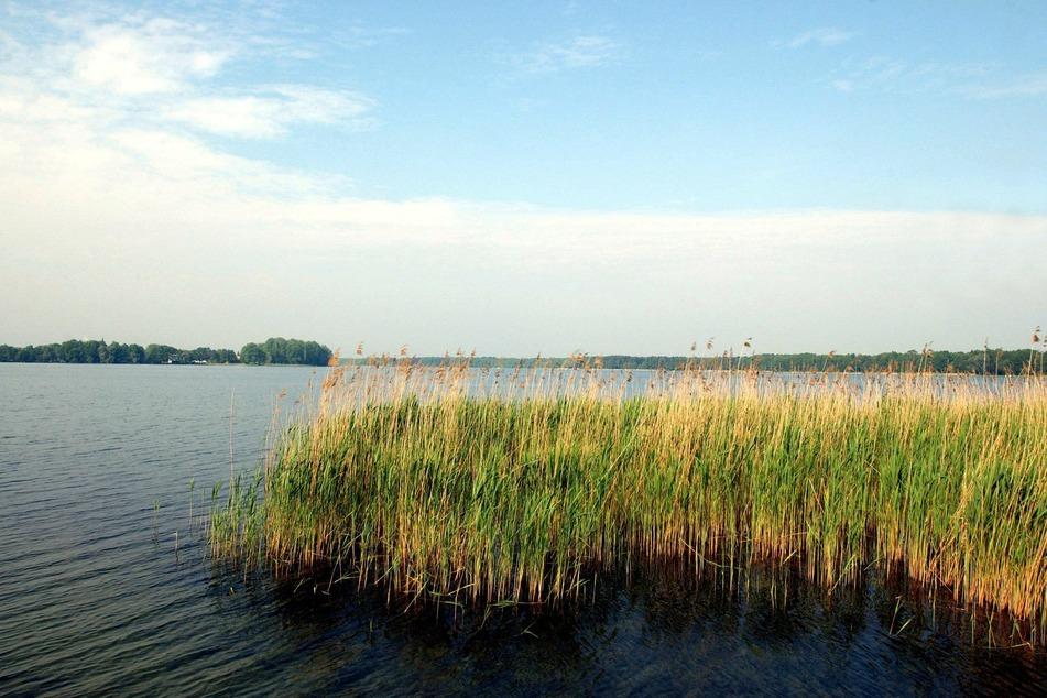Im brandenburgischen Wandlitzsee wurde ein Mann leblos geborgen (Archivbild).