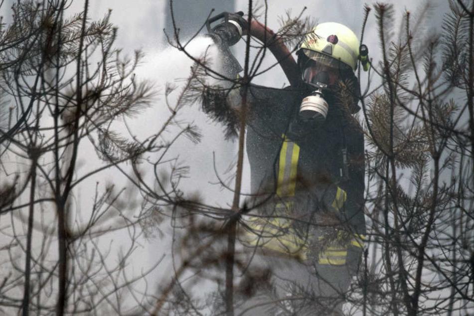 Die Feuerwehr kämpft weiter gegen den Waldbrand in Brandenburg.