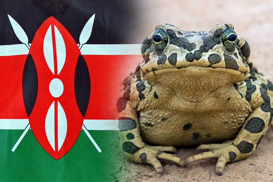 """Grünes Licht für """"Kenia-Koalition"""", doch alle müssen Kröten schlucken"""