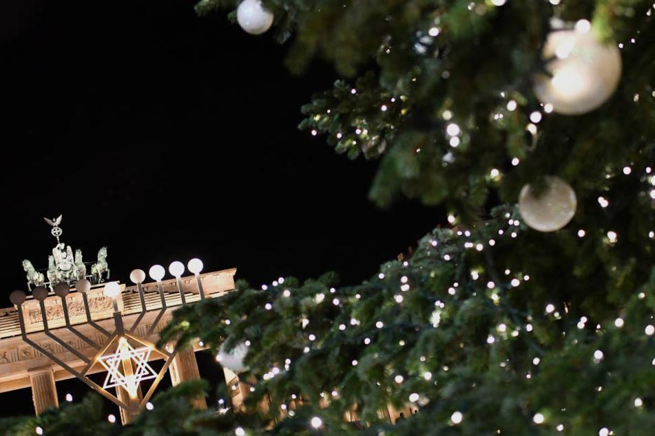 So wie hier 2016 wird der Weihnachtsbaum für das Brandenburger Tor auch in diesem Jahr in Thüringen gefällt werden.