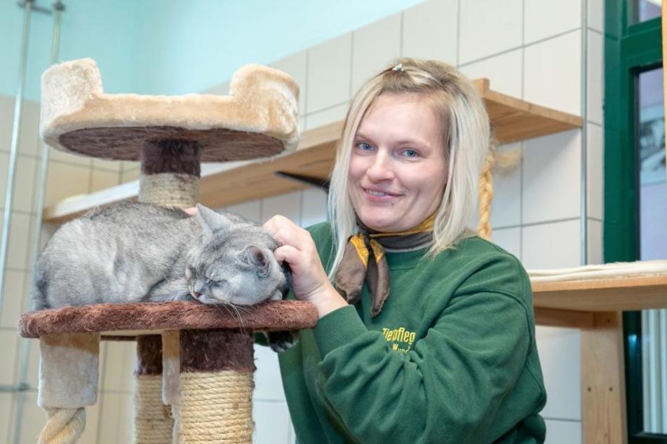 Die Mieze ist noch zu haben: Europäisch Kurzhaar Gombi (13) mit Tierpflegerin Madlen Wunderlich (33).