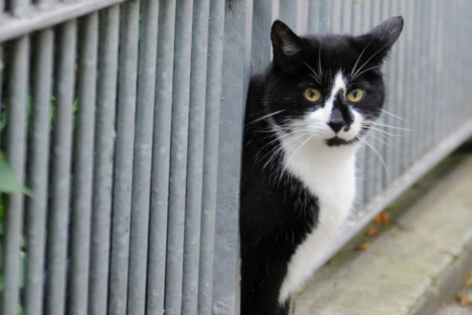 Die wilden Katzenpopulationen sind kaum unter Kontrolle zu halten.