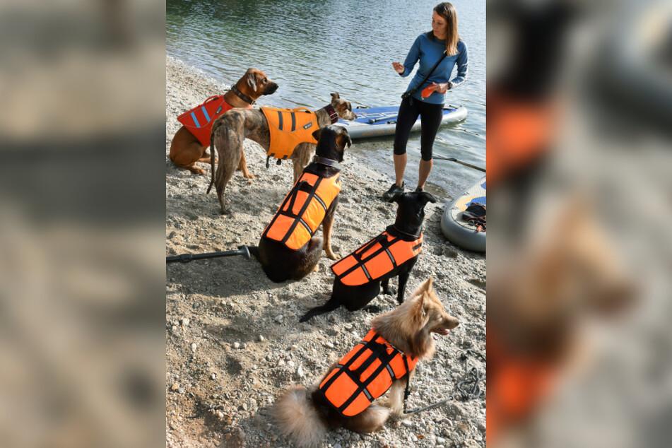 Auch die Doggos bekommen eine Einweisung von Trainerin Monique Hunger (32). Damit keiner ungewollt baden geht, tragen die Vierbeiner Rettungswesten.
