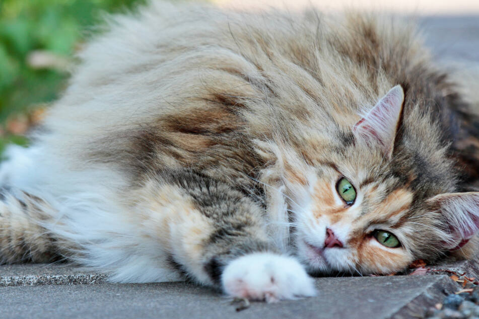 """Einfach grausam: Beine abgetrennt! Polizei sucht """"Katzenhasser"""""""
