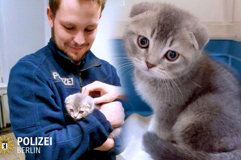 Die Berliner Polizei hat ein kleines Kätzchen gefunden.